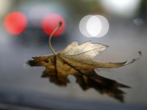 Leaf Reflections by Nicole Katano