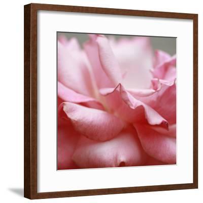 Rose Petals III