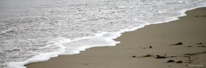 Shore Break by Nicole Katano