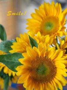 Smile: Sunny Sunflower by Nicole Katano
