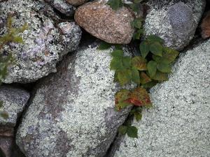 Stones and Vines by Nicole Katano