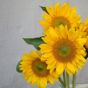 Sunflower Bouquet by Nicole Katano