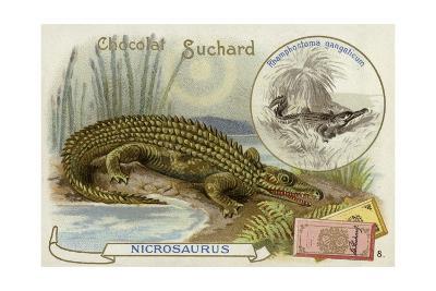 Nicrosaurus and Crocodile--Giclee Print