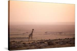Kenya, Mara North Conservancy. a Young Giraffe with Never Ending Plains of Maasai Mara Behind by Niels Van Gijn