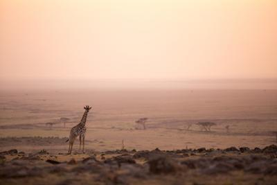 Kenya, Mara North Conservancy. a Young Giraffe with Never Ending Plains of Maasai Mara Behind by Niels Van Gijn
