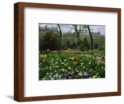 Poppies in Parc De Monceau, Paris, France, Europe