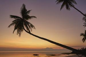 A dusk silhouette of coconut palms at Paliton beach, Siquijor, Philippines, Southeast Asia, Asia by Nigel Hicks