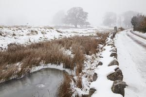 A Frozen Pond, with Snow and Fog, Beside the Estuary of the River Exe Near Powderham, Devon by Nigel Hicks