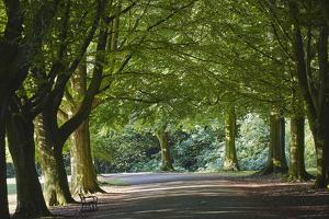 A Tree-Lined Avenue in Clifton, Bristol, England, United Kingdom, Europe by Nigel Hicks