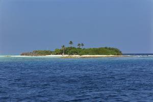Madivaru island, Rasdhoo atoll, Maldives, Indian Ocean, Asia by Nigel Hicks