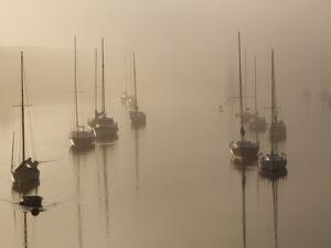 Sailboats on their Harbor Moorings, in Early Morning Fog by Nigel Hicks