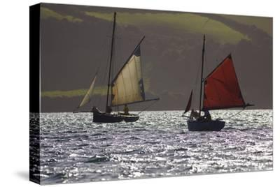 Sailing Oyster Dredgers Working the Native Oyster Bed in Carrick Roads Near Falmouth, Cornwall