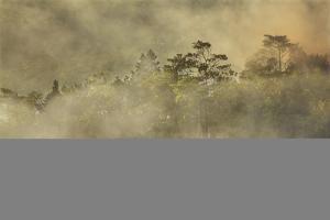 Smoke from a fire drifts across rainforest, near San Juan, Siquijor, Philippines, Southeast Asia, A by Nigel Hicks