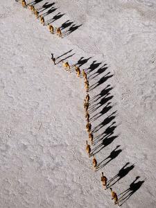 Afar Camel Caravan Crossing the Salt Flats of Lake Assal, Djibouti as Shadows Lengthen in the Late  by Nigel Pavitt