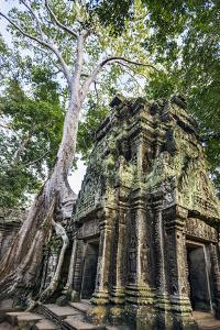 Cambodia, Ta Prohm, Siem Reap Province. the Ruins of the Buddhist Temple of Ta Prohm by Nigel Pavitt