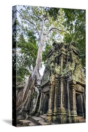 Cambodia, Ta Prohm, Siem Reap Province. the Ruins of the Buddhist Temple of Ta Prohm