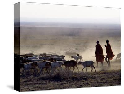 In the Early Morning, a Maasai Herdsboy and His Sister Drive their Flock of Sheep across the Dusty