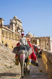 India, Rajasthan, Jaipur by Nigel Pavitt