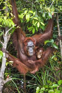 Indonesia, Central Kalimatan by Nigel Pavitt
