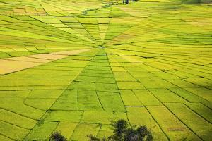 Indonesia, Flores Island, Cancar. the Attractive Spider S Web Rice Paddies Near Ruteng. by Nigel Pavitt