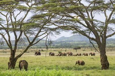 Kenya, Meru County by Nigel Pavitt