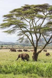Kenya, Meru County by Nigel Pavitt