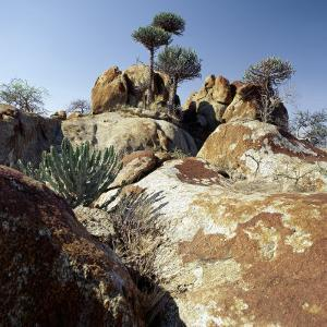 Lichen-Stained Boulders and Euphorbia Trees Add Form and Colour to Lake Eyasi's Impressive Western  by Nigel Pavitt