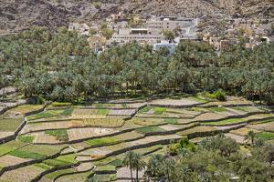 Oman, Ad Dakhiliyah Governorate by Nigel Pavitt