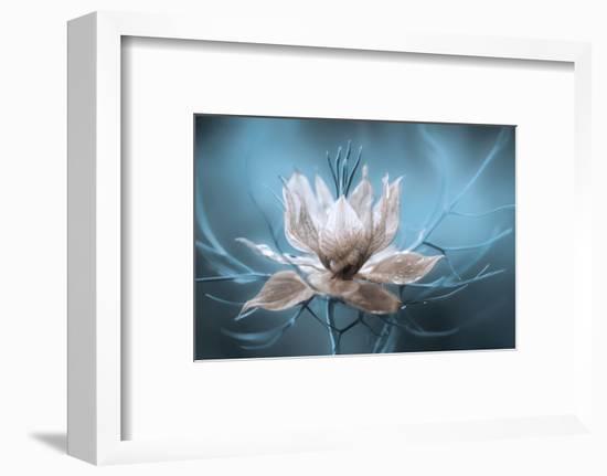 Nigella-Mandy Disher-Framed Photographic Print
