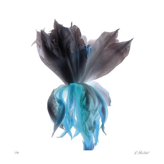 Night Bloom 2-Kate Blacklock-Giclee Print