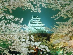 Night View of Osaka Castle & Cherry Blossoms, Japan