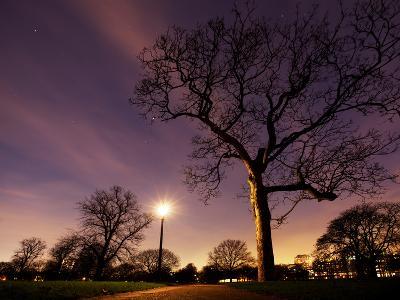 Nightime in Hyde Park, London-Alex Saberi-Photographic Print