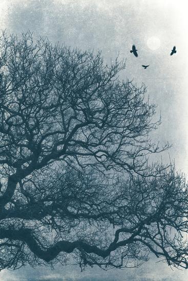 Nights Roost-David Baker-Photographic Print