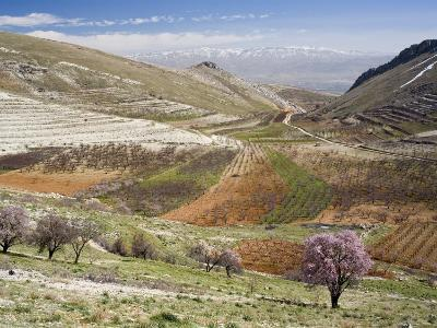 Niha, Bekaa Valley, Lebanon-Ivan Vdovin-Photographic Print