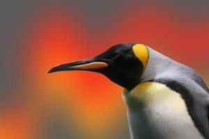 Penguin with a Modified Background by Nik Frey
