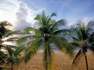Curtain Bluff Hotel Beach, Antigua, Caribbean by Nik Wheeler
