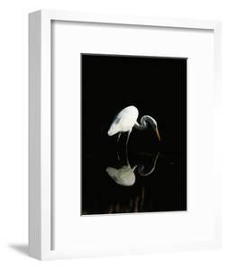 Great Egret by Nik Wheeler