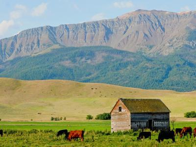 Wallowa Mountains and Barn in Field Near Joseph, Wallowa County, Oregon, USA
