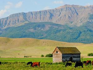 Wallowa Mountains and Barn in Field Near Joseph, Wallowa County, Oregon, USA by Nik Wheeler