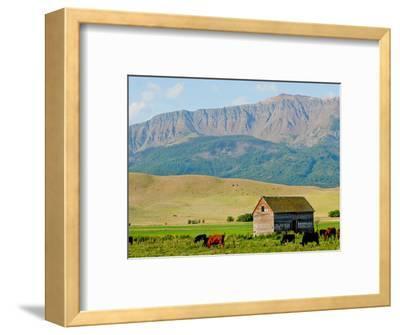 Wallowa Mountains and Barn in Field Near Joseph, Wallowa County, Oregon, USA