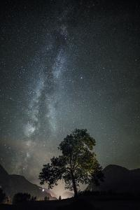 Beech with the Milky Way in the Background by Niki Haselwanter