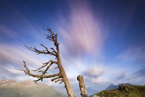 Clouds with Knobby Tree in the Foreground by Niki Haselwanter