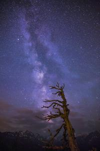 Milky Way with Old Trees in the Foreground by Niki Haselwanter
