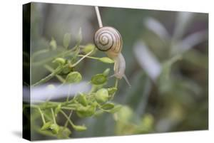 Snail with House on Green Flowers by Niki Haselwanter