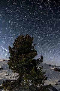Star Trails with Pine in the Portrait in Winter by Niki Haselwanter