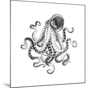Hand-Drawn Illustration Octopus, Vector Isolate on White Background. by Nikiparonak