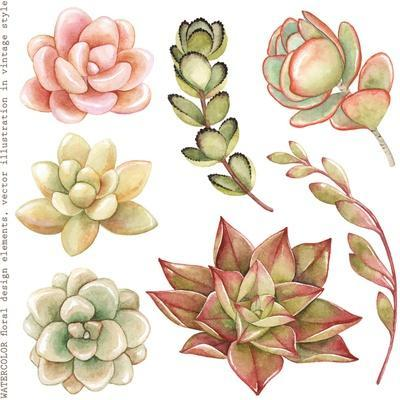Watercolor Collection of Succulents and Kalanchoe for Your Design, Hand-Drawn Illustration.