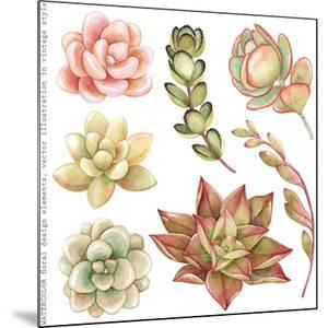 Watercolor Collection of Succulents and Kalanchoe for Your Design, Hand-Drawn Illustration. by Nikiparonak