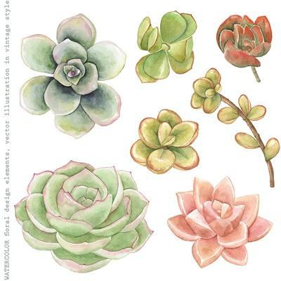 Watercolor Collection of Succulents for Your Design, Hand-Drawn Illustration.