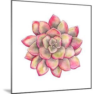 Watercolor Colorful Succulent Echeveria, Hand-Drawn Illustration in Vintage Style. by Nikiparonak